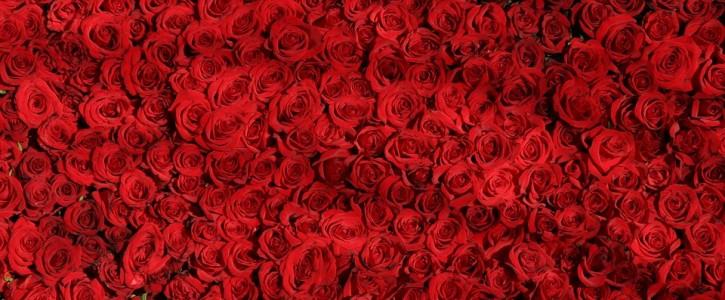 valentines day newsletter