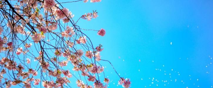 Easter Newsletter Photo - Newsletter2Go